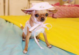 cappellino-cane-piccola-taglia